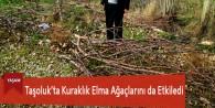 Taşoluk'ta Kuraklık Elma Ağaçlarını da Etkiledi
