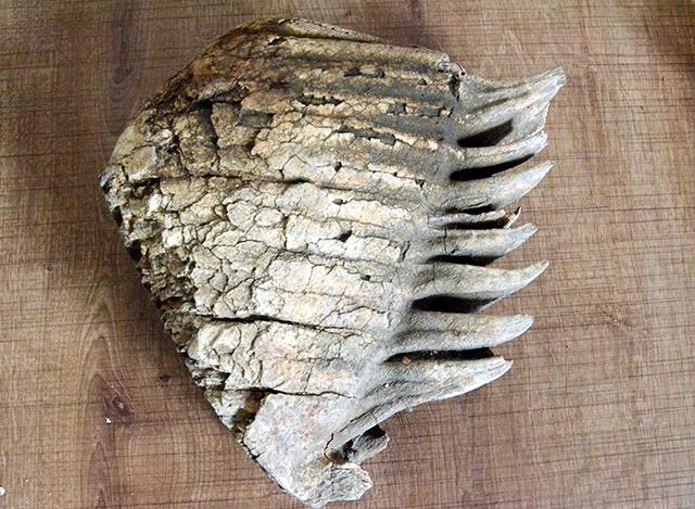 kaski-mamuttt1