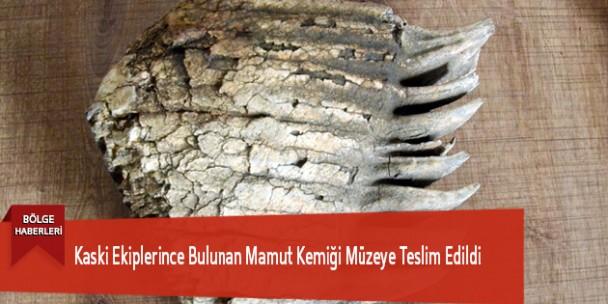Kaski Ekiplerince Bulunan Mamut Kemiği Müzeye Teslim Edildi