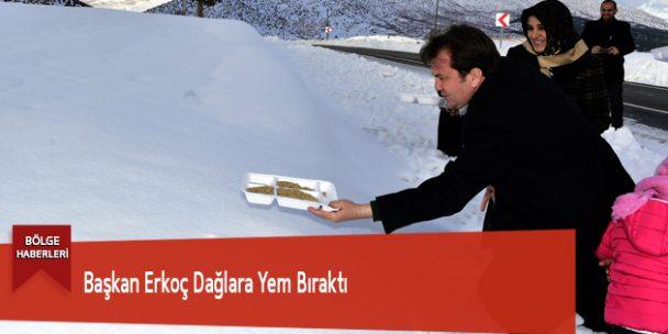 Başkan Erkoç Dağlara Yem Bıraktı