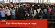 Büyükşehirden Hayvan Organize Sanayisi