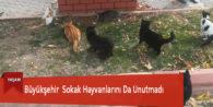Büyükşehir  Sokak Hayvanlarını Da Unutmadı