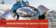 Dulkadiroğlu Belediyesi Yaban Hayvanlarını Unutmuyor