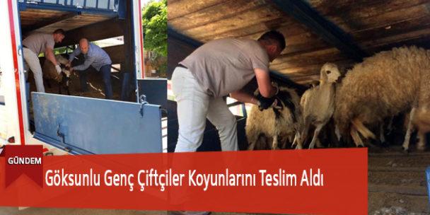 Göksunlu Genç Çiftçiler Koyunlarını Teslim Aldı