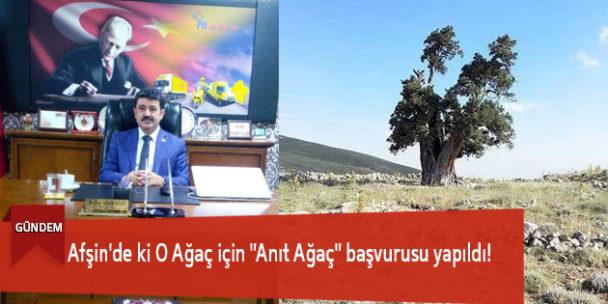 """Afşin'de ki O Ağaç için """"Anıt Ağaç"""" başvurusu yapıldı!"""